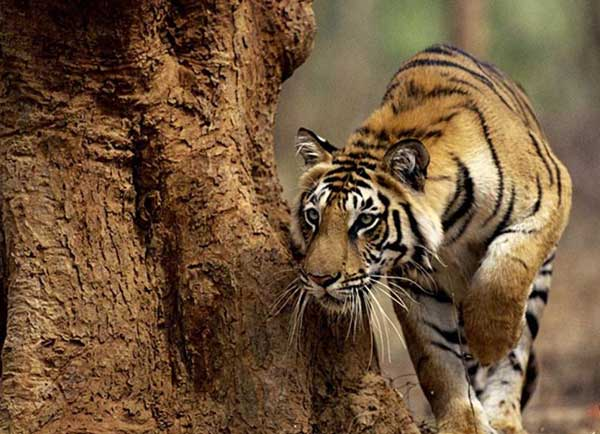 Wildlife tour packages in Uttarakhand by Dada Boudir tour and travels